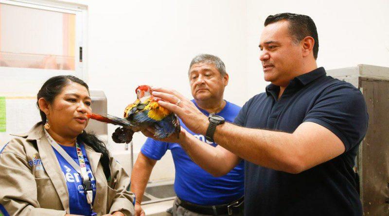 Renán Barrera supervisa  el cuidado a las especies  en Animaya